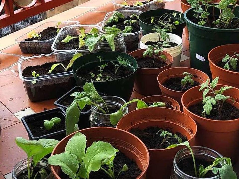 Kräuter und Gemüse kannst du super in Töpfen auf dem Balkon heranziehen    Foto: Claudia Förster Ribet