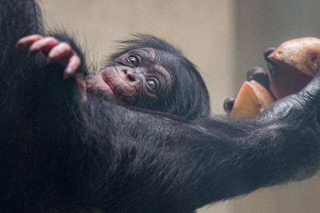 Direktor des Basler Zoos: