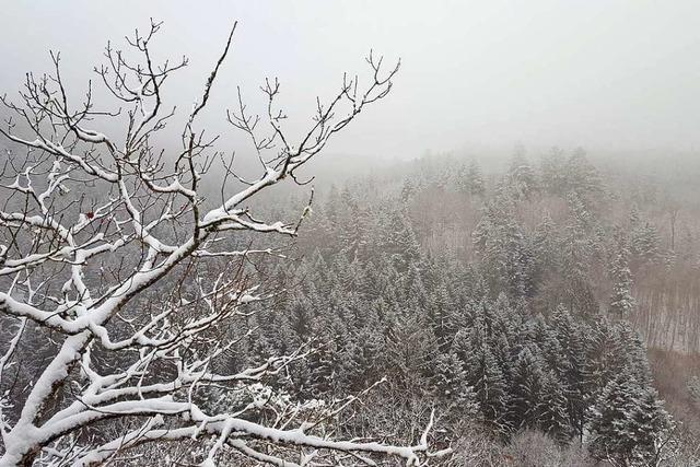 Förster aus dem Kreis Waldshut warnen vor Waldbesuchen