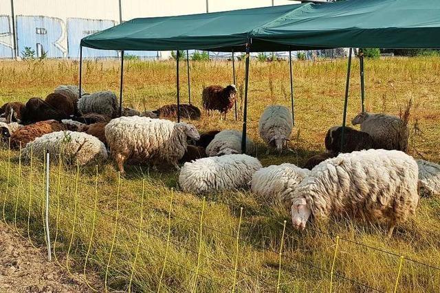 Schäferin muss sich wegen Tierquälerei vor Gericht verantworten