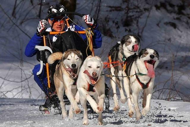 Todtmoos sagt Schlittenhunderennen am Wochenende ab