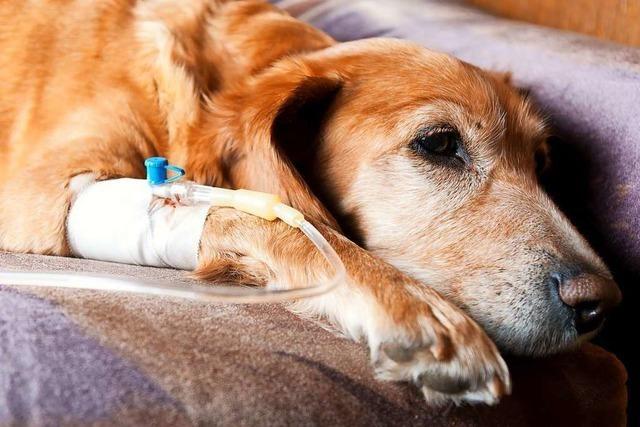 Immer wieder finden Hundehalter mutmaßliche Giftköder