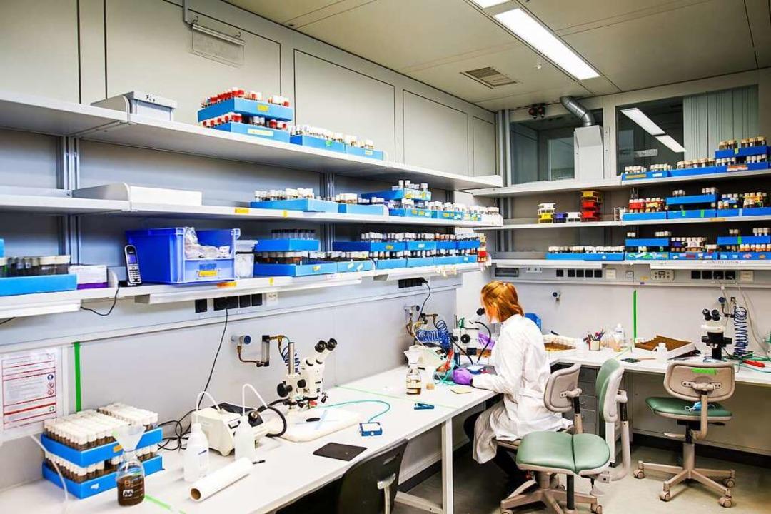 Praktische Arbeit im wissenschaftliche...laborantin Kathrin Ganter am Mikroskop  | Foto: Philipp Von Ditfurth