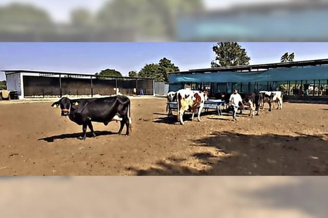 Meilenstein für Kuh-Projekt