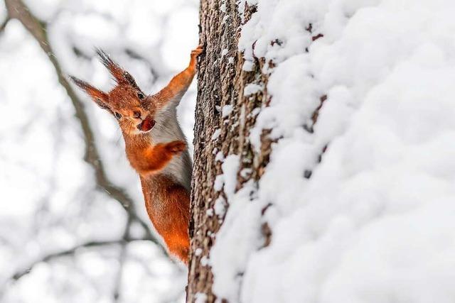 Was es im Wald im Winter alles zu entdecken gibt