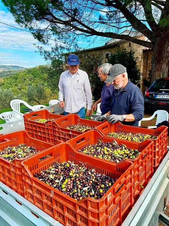 Frisch geerntete Oliven    Foto: Nora Bezzola