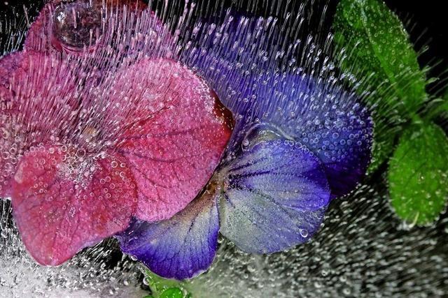 Blumen entwickeln Persönlichkeiten