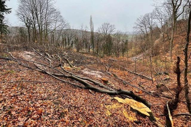 Die Baumfällungen bei Ettenheim werden unterbrochen