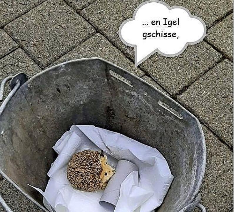   Foto: Pflumeschlucker