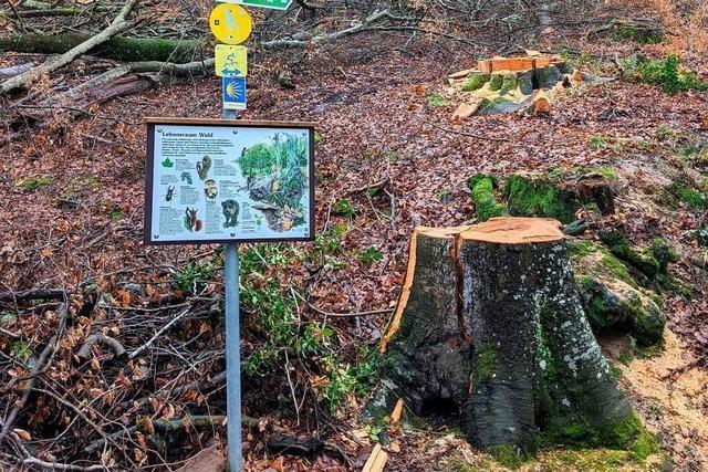 Bei den Baumfällungen rund um Ettenheim gibt es eine Annäherung
