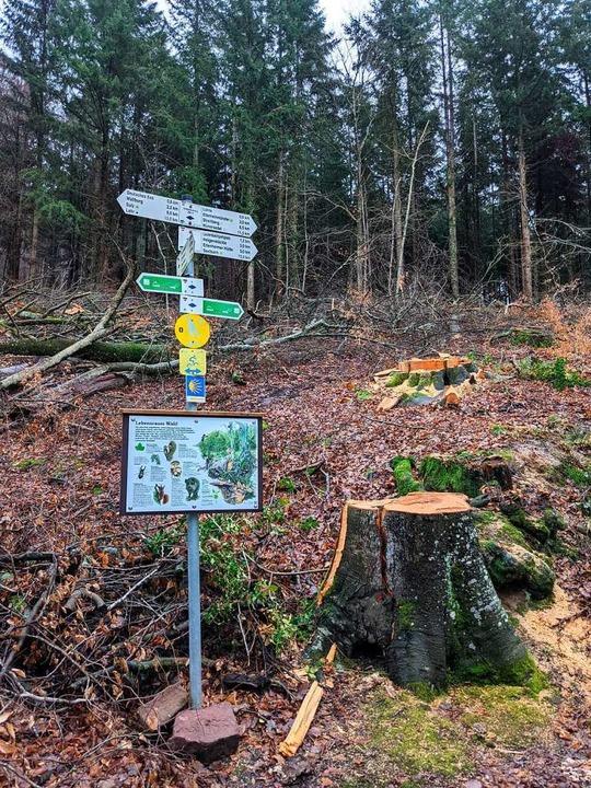 Baumfällarbeiten zwischen Münchweier und Wallburg   | Foto: Erika Sieberts