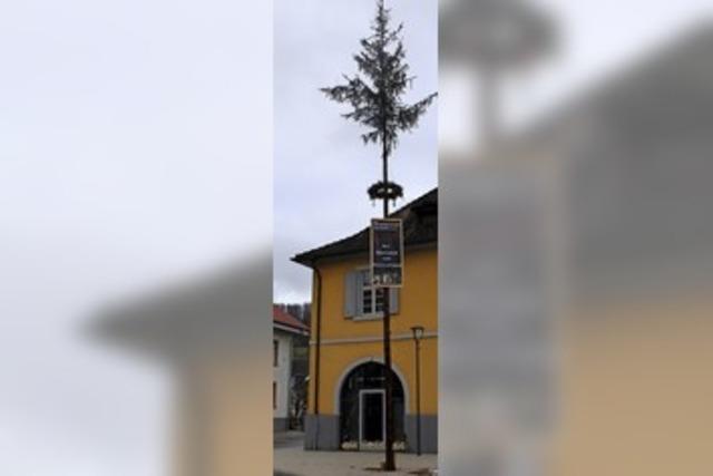Der Narrenbaum als ein weiteres Lebenszeichen