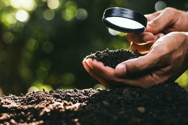 Wasser, Lebensmittel, Tierwelt – vieles wäre anders ohne gesunden Erdboden