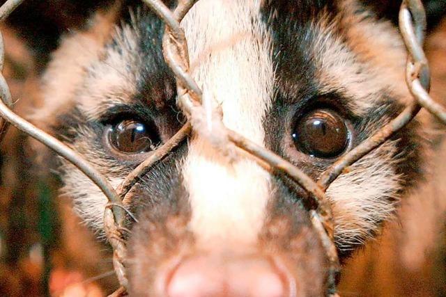 Wildtiermärkte sind Brutstätten für neue Viren und Krankheiten