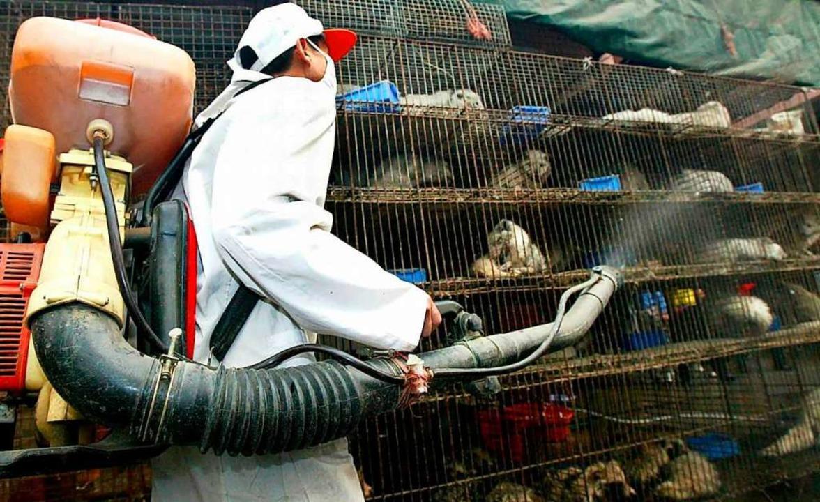 Kampf den Keimen und Viren: Ein Arbeiter desinfiziert Tierkäfige.    Foto: Chang Feng