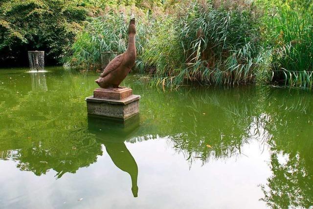 Der Ur-Erpel steht Modell für den neuen Stadtgarten-Enterich