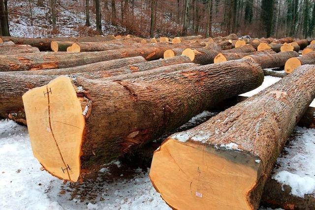 Holzverkauf im Landkreis knackt Mengenrekord