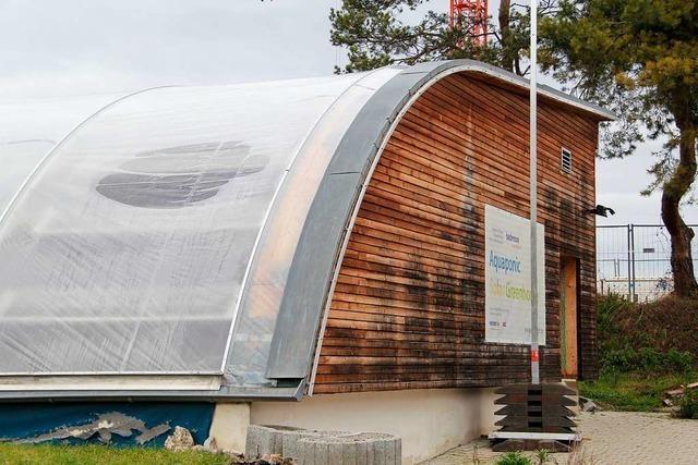 Spannendes Projekt umgenutzt: Wasserhyazinthen statt Basilikum