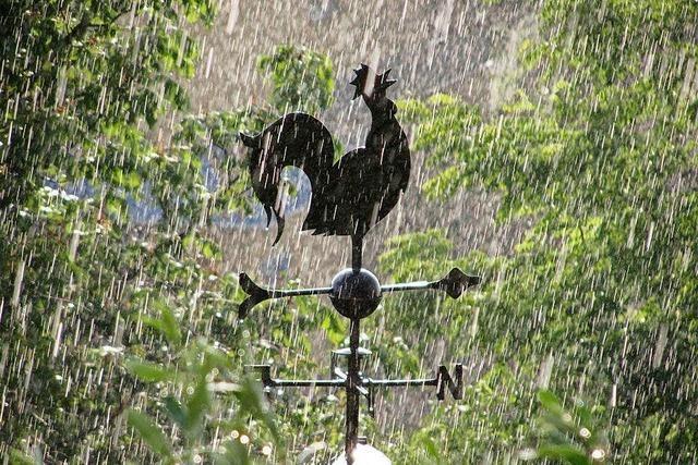 Wetterhahn im Mairegen