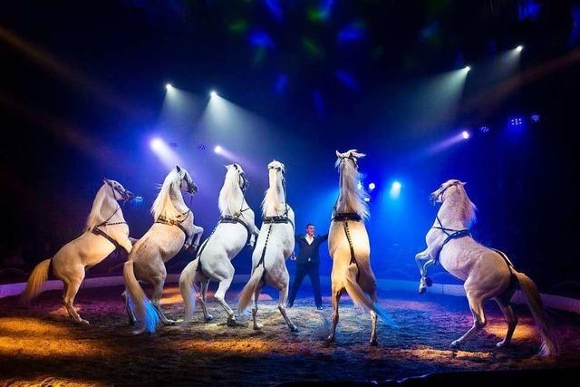 Der Offenburger Weihnachtscircus will nach Corona durchstarten