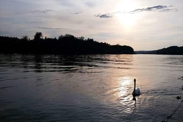 Abendlicht spiegelt sich im Rhein