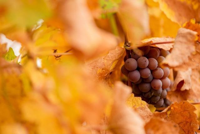 Winzer und Landwirte dürfen weiterhin Pflanzenschutzmittel benutzen