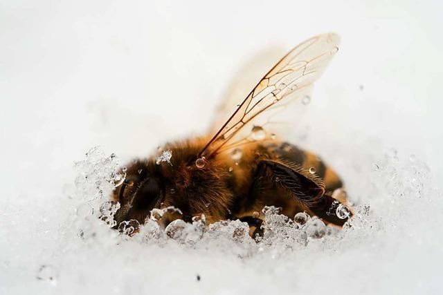 Lob und Kritik für Insektenschutz-Gesetz