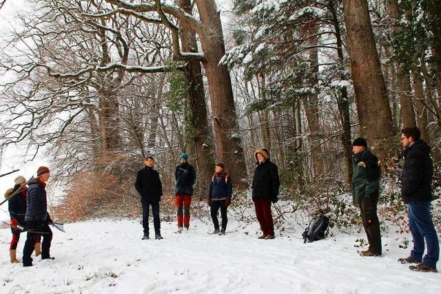 17 Eichen im Ettenheimer Wald dürfen stehen bleiben