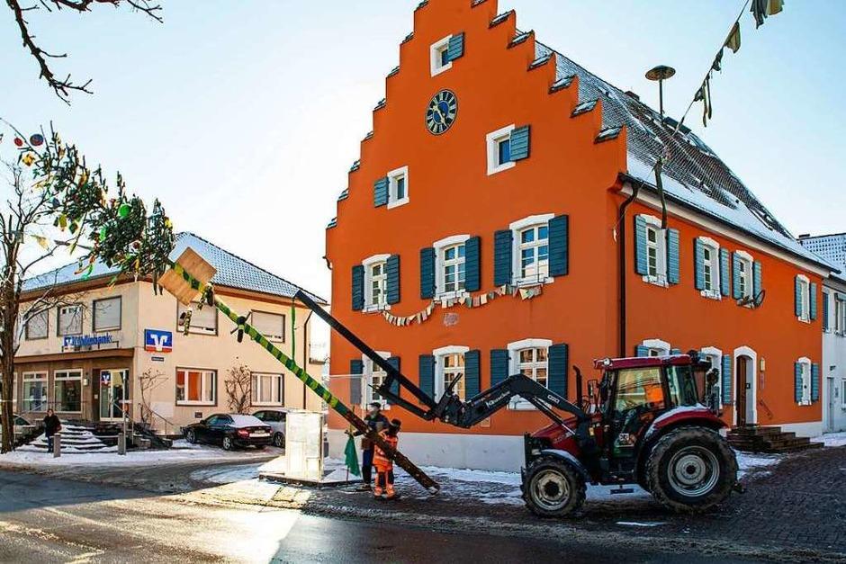 In Gottenheim wurde der Narrenbaum mit Hilfe der Bauhofmitarbeiter aufgestellt. (Foto: Hubert Gemmert)