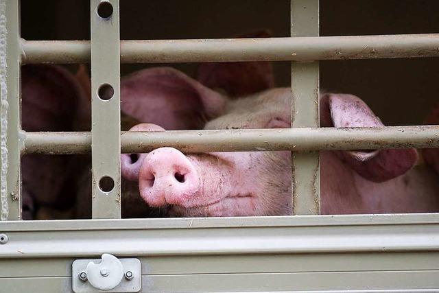 Werden Tiertransporte in bestimmte Länder verboten?