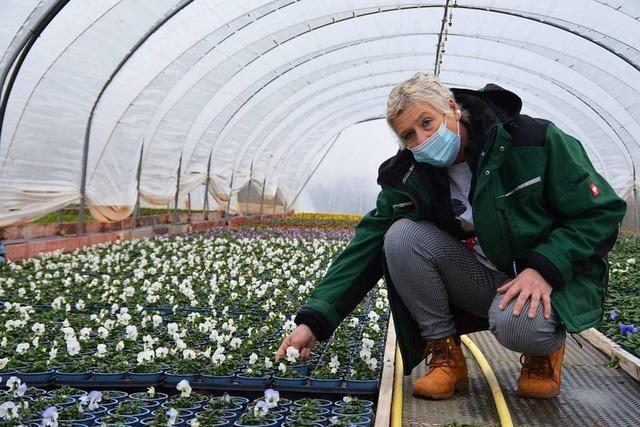 Frust in den Gärtnereien – auch am Valentinstag werden nur wenige Blumen verkauft