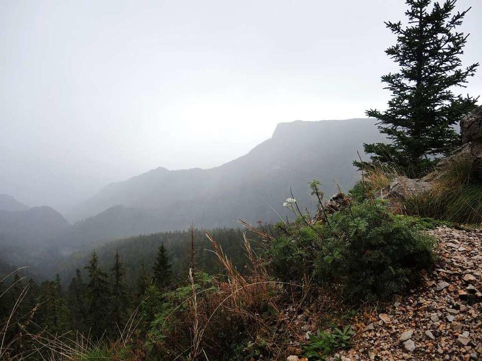 Unterwegs im Nationalpark – auch bei Regen und Nebel ein Erlebnis.  | Foto: Uwe Baumann