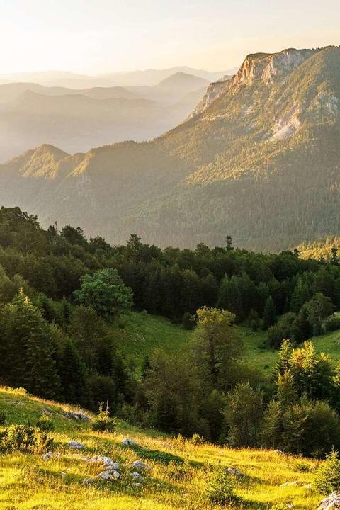 Über den Perucica-Urwald hinweg in die Ferne schweifen.  | Foto: Philipp Laage
