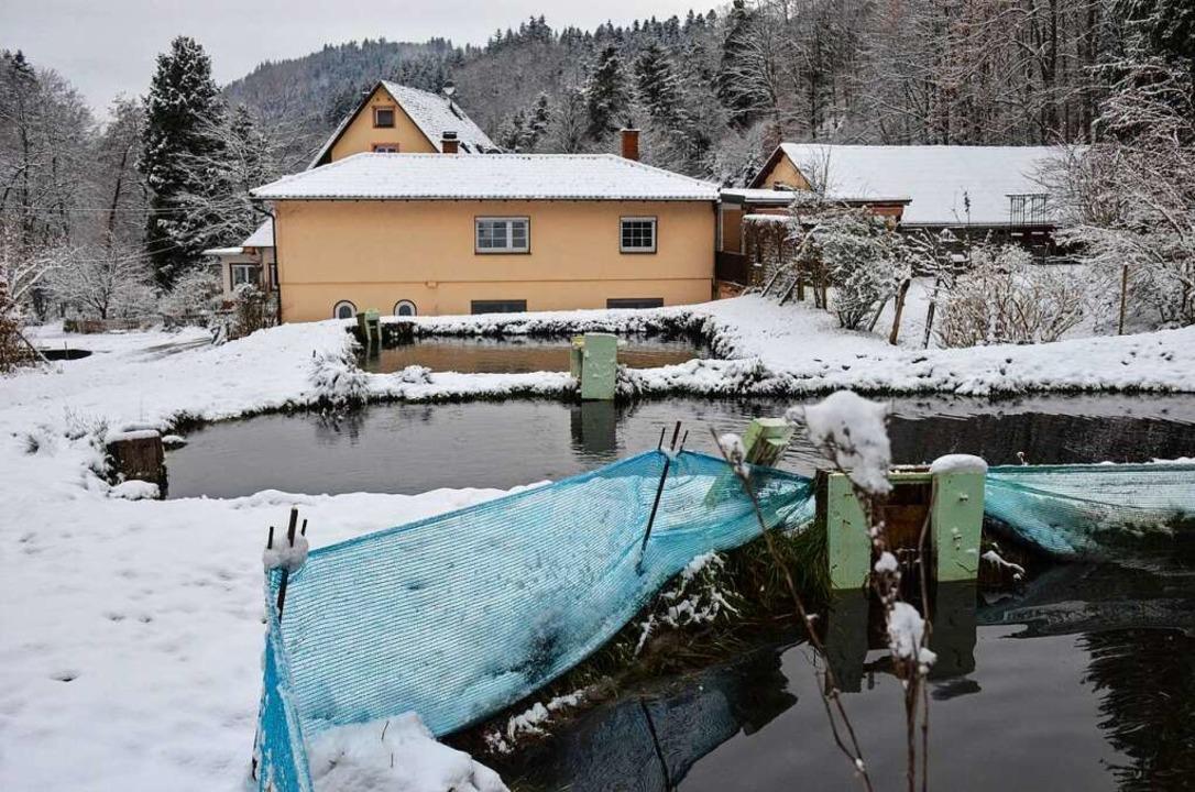 Die Forellenzucht im Winterkleid. Die ...e Abläufe vor dem Einfrieren schützen.  | Foto: Gabriele Hennicke