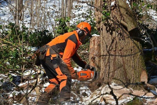Forstarbeiter im Raum Freiburg sind täglich mit Risiken konfrontiert