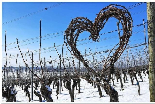 Liebesgruß im Weinberg – zum Valentinstag?