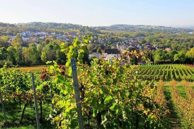Markgräfler Winzer fordern mehr gemeinsame Anstrengung in der Tourismuswerbung