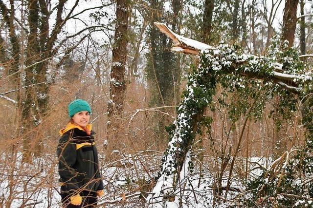 Für den Wald ist Dürre schlimmer als der viele Schnee