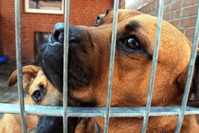 Ist Zwingerhaltung für Hunde bei Minusgraden angemessen?
