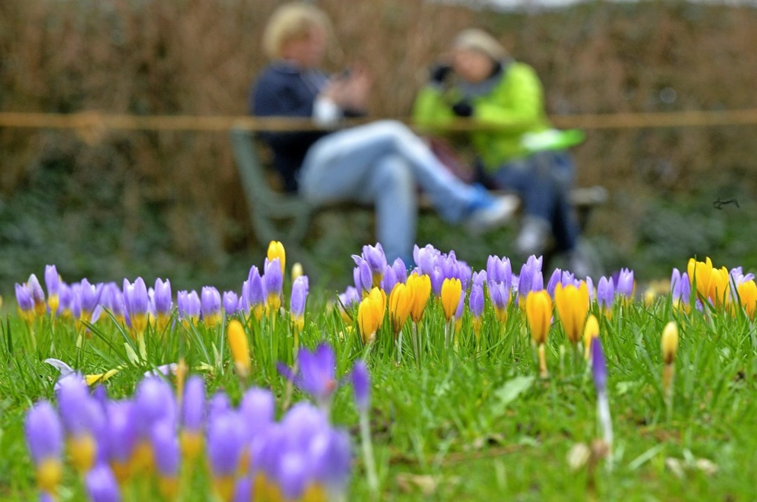 Frühling im Februar im Freiburger Stadtgarten    Foto: Michael Bamberger