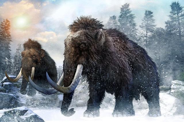 Forscher finden uralte Mammut-DNA
