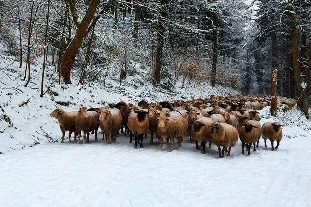 Tierische Begegnungen auf dem Schlossberg und im Mooswald