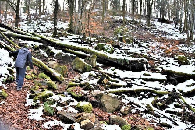 Der Urwaldpfad bei Schönau führt in den Wald von morgen
