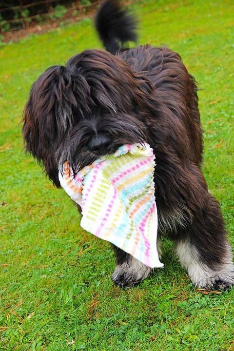 Hunde sind beliebte Begleiter in der Pandemie.    Foto: Eva Korinth