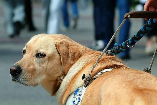Helferhunde sollen in Freiburg steuerfrei sein