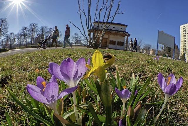 Frühlingsboten im Bürgerpark