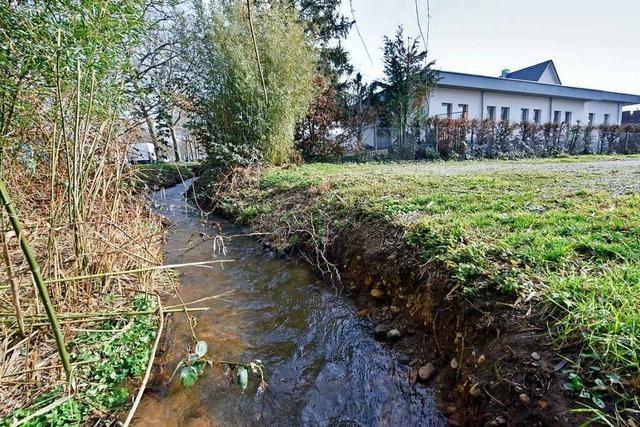 Mit der Verlegung eines Bachs werden in Freiburg Fakten geschaffen