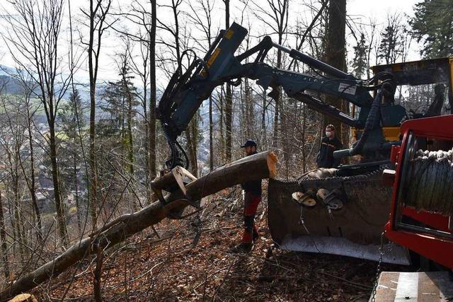 Im Schopfheimer Stadtwald wird mit schwerem Gerät aufgeräumt