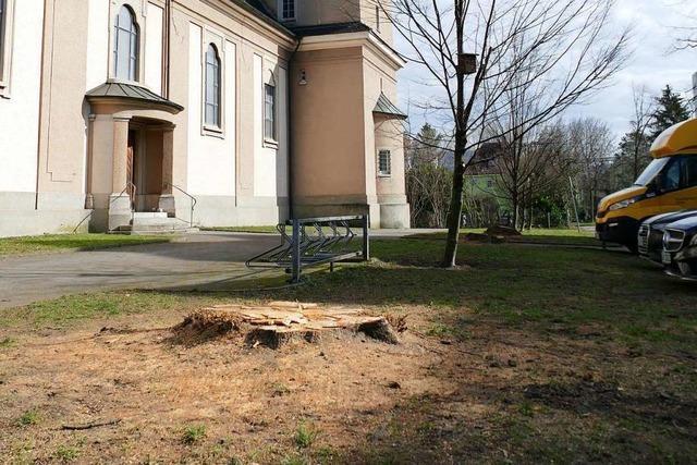 Kirchengemeinde in Rheinfelden fällt vier große Linden