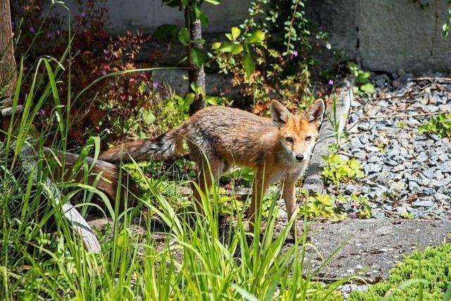 Ühlingerin leitet eine private Auffangstation für Wildtiere
